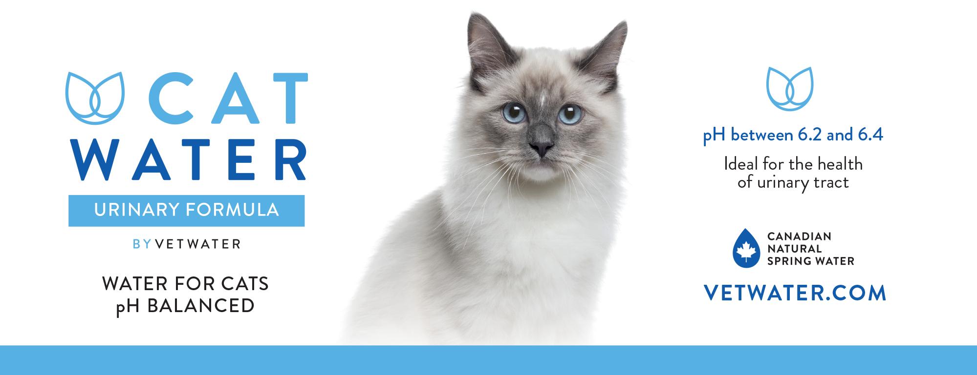 Cat Water Header image
